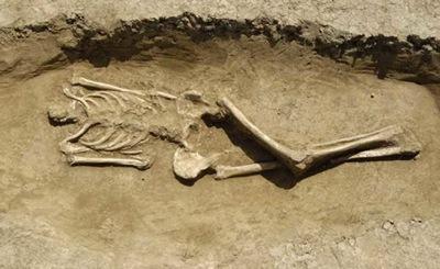 scheletro acefalo