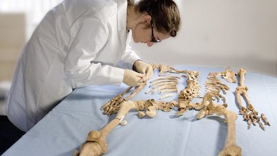 _73388505_osteological_analysis2